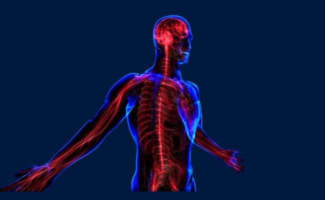 Воздействие массажа на центральную нервную систему человека